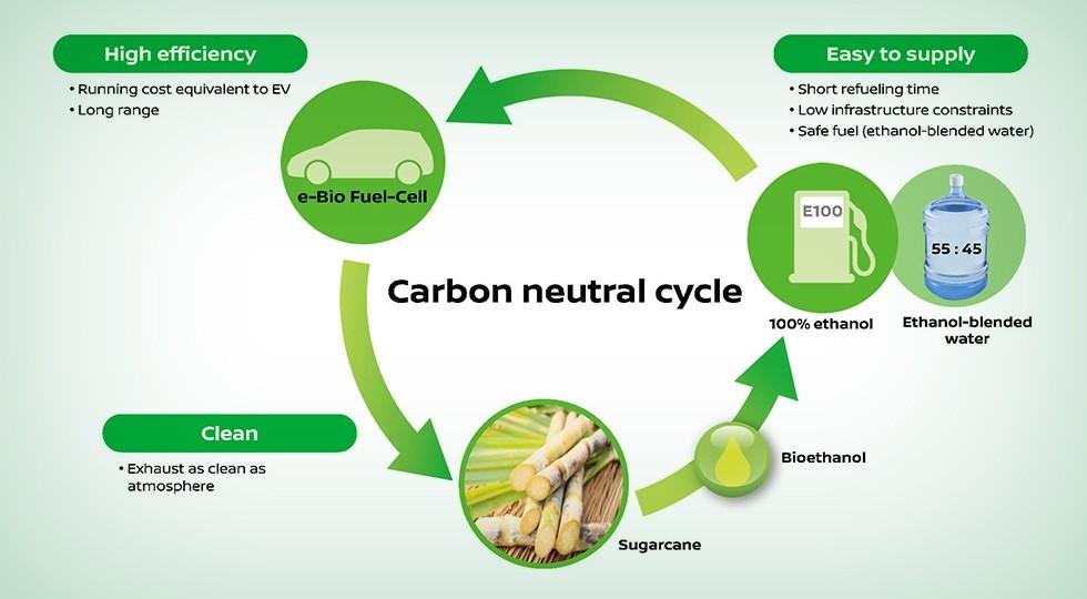 Этанол получают из сахарного тростника, которого предостаточно в Азии и Америке