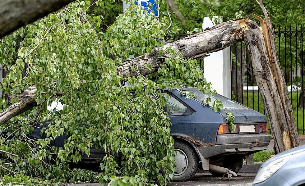 Порядок действий в случае если дерево упало на машину