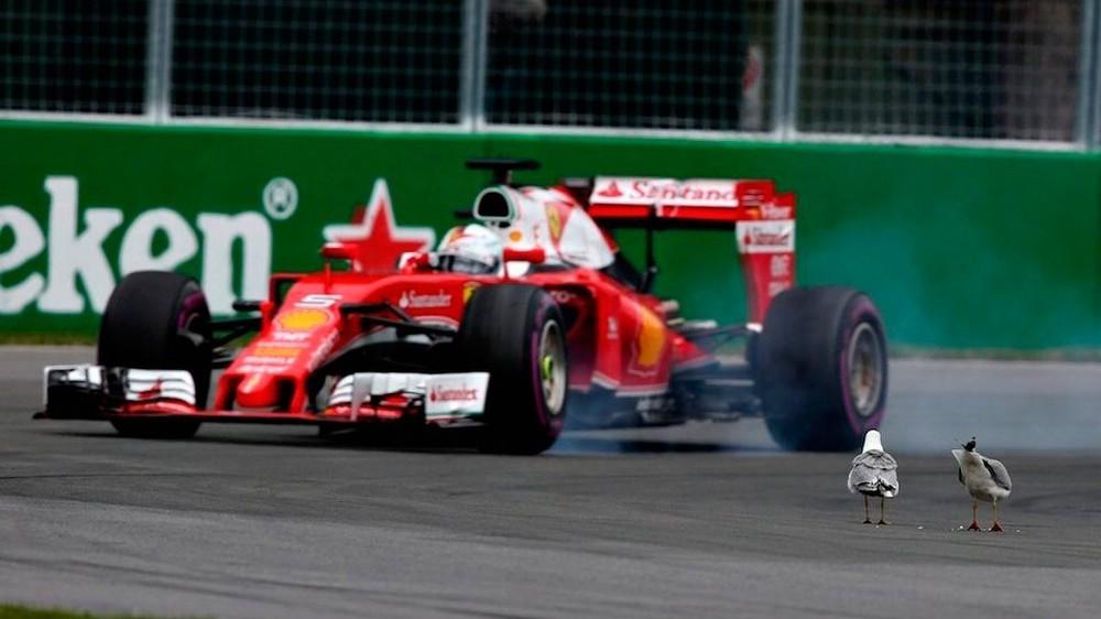 На втором круге гонки в Монреале Себастьяна Феттеля ждал неприятный сюрприз в виде двух чаек на апексе поворота