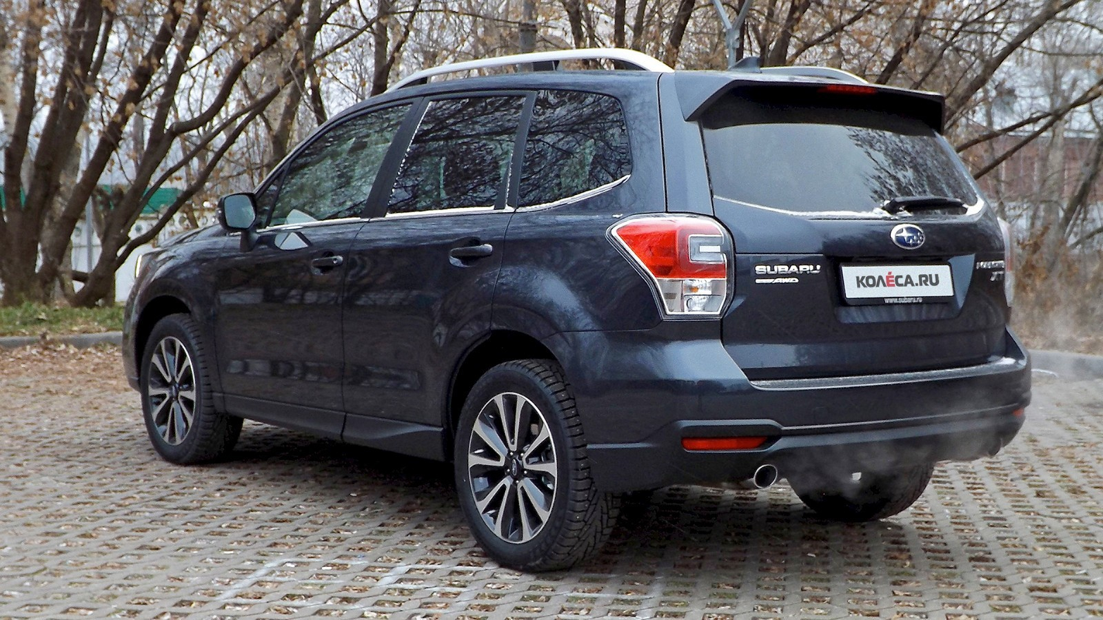 Forester_6