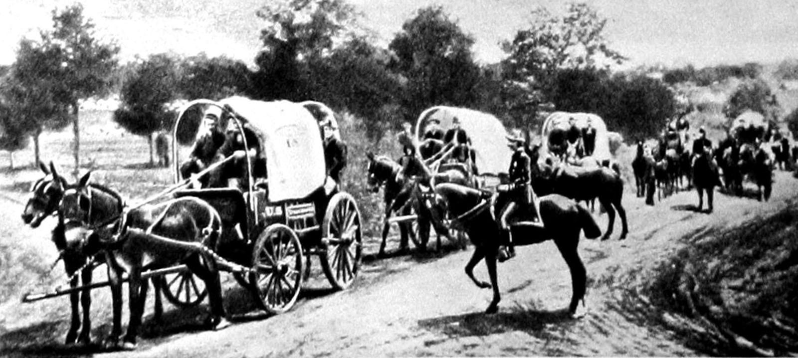 Высокие гужевые повозки Studebaker в американской армии. 1898 год